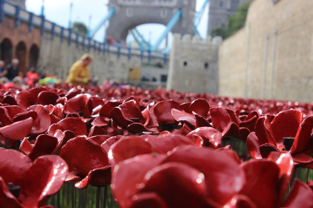 Tower Bridge Poppies Images Poppies And Tower Bridge