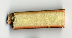 6b sezione longitudinale del fusto