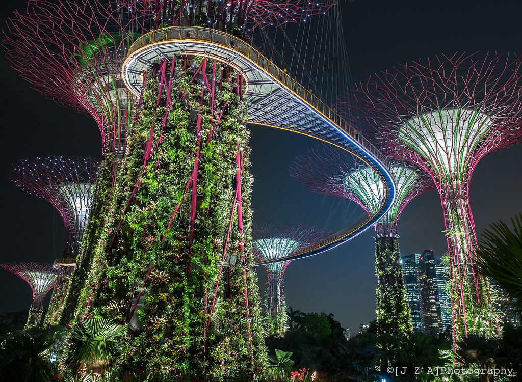 Skyway Through A Supertree Grove At The Gardens By The Bay