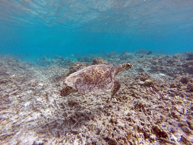 snorkeling in gili meno