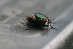 fly eyes