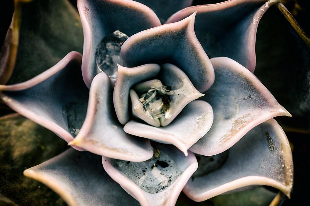 In Spades: Cactus