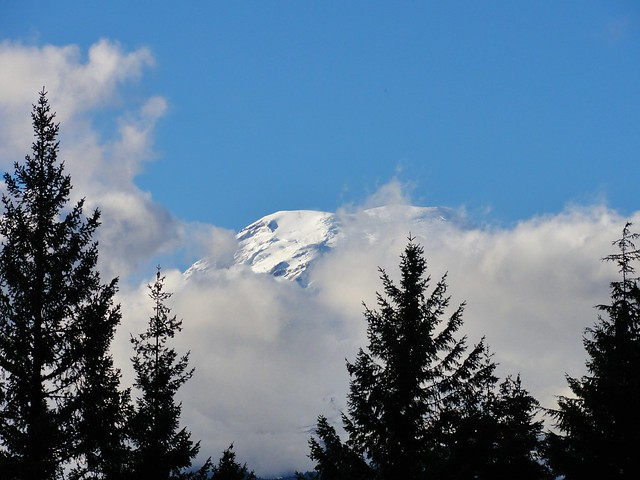 Image shows the summit of Mount Rainier peeking from behind white clouds, above the trees.