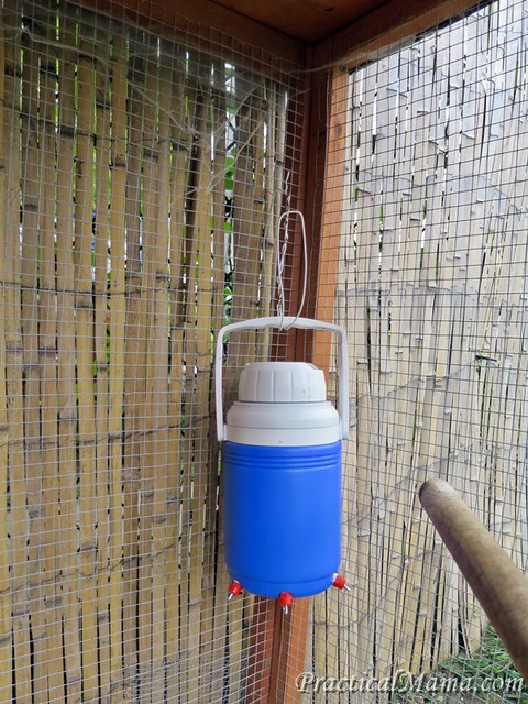Chicken Waterer 03