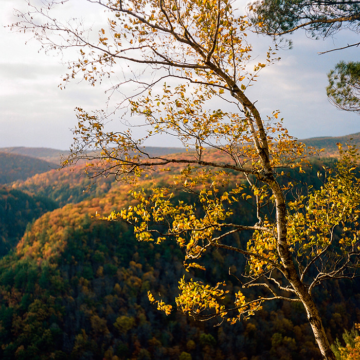 © 2016. Pine Creek Gorge in northern Pennsylvania. Tuesday, Oct. 18, 2016. Portra 400, Mamiya C220.