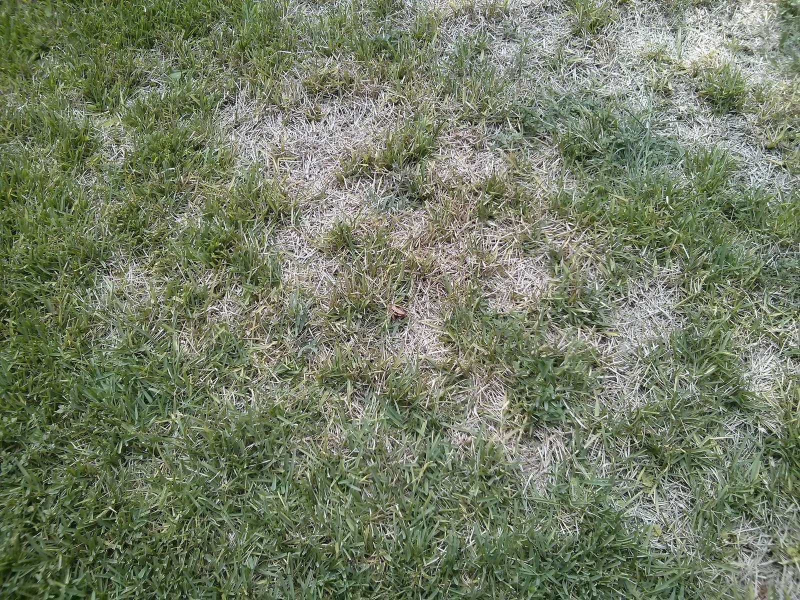 brown spots on lawn