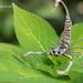 Cute DIY Scorpion~