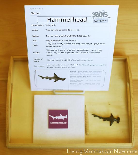 Hammerhead Shark Tray