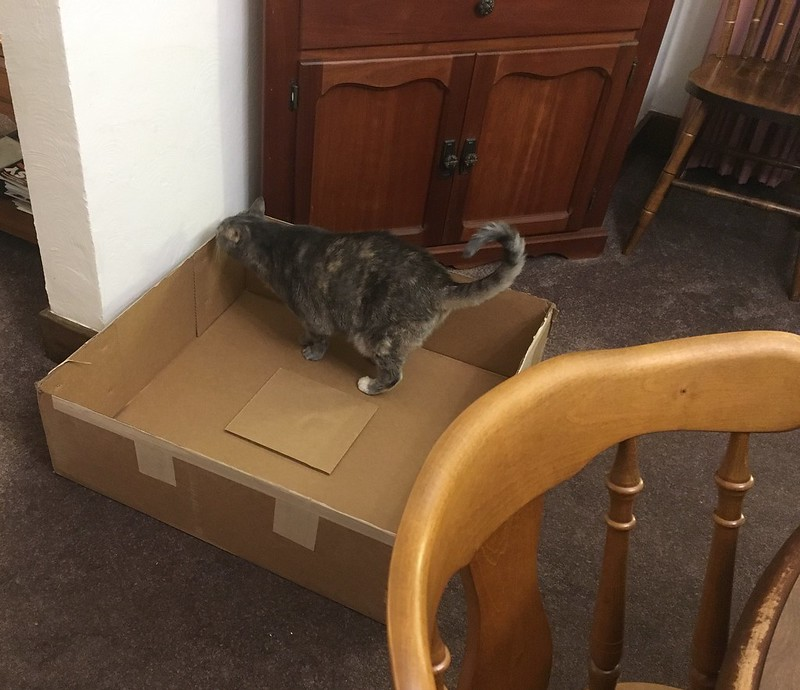 Siobhan says, Thanks for the box!