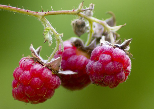 Raspberries | by Steffe