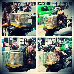 Khach hang  www.hamstermiendathua.vn www.thobo.vn