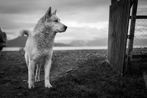 Southern dog | Flickr - Photo Sharing!