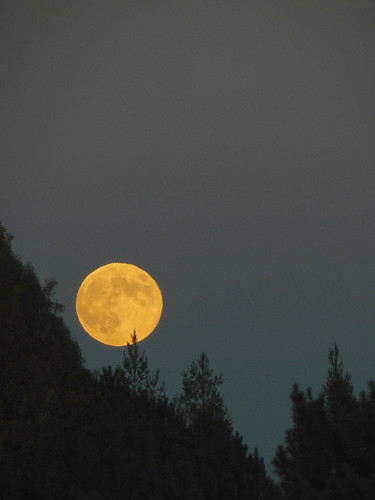 shine on harvest moon pdf