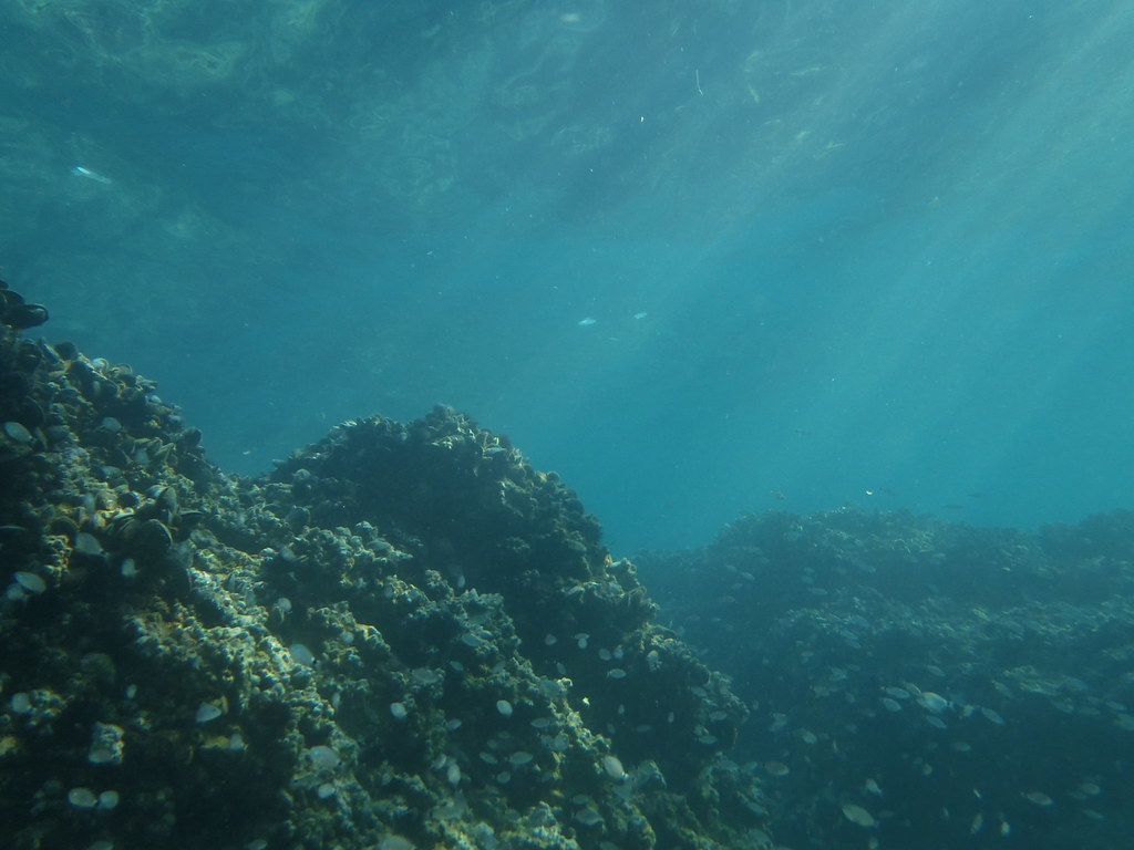 Image gallery inside the sea for Ocean ground