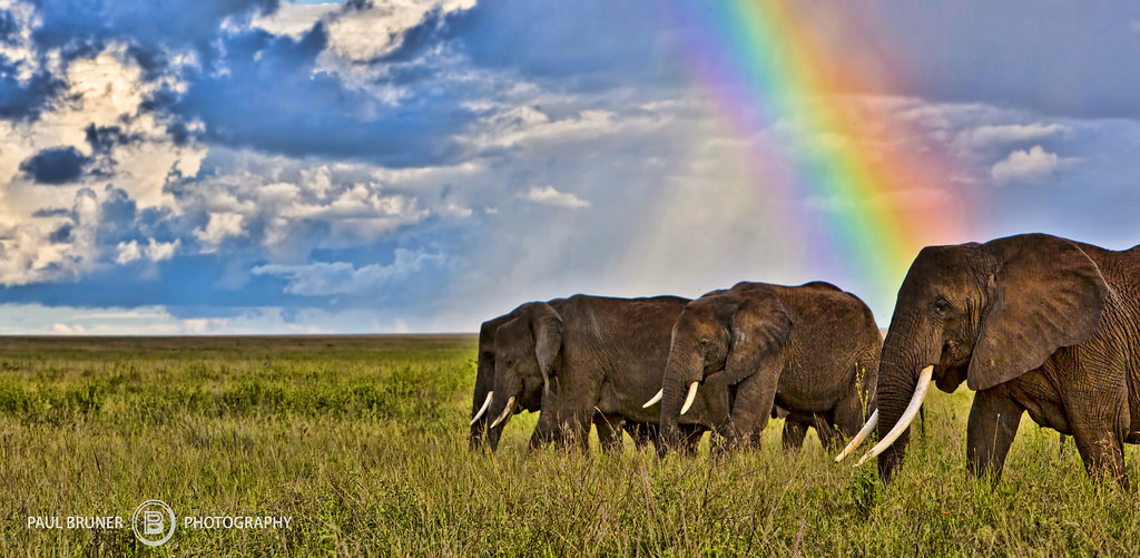 Elephants and Rainbow