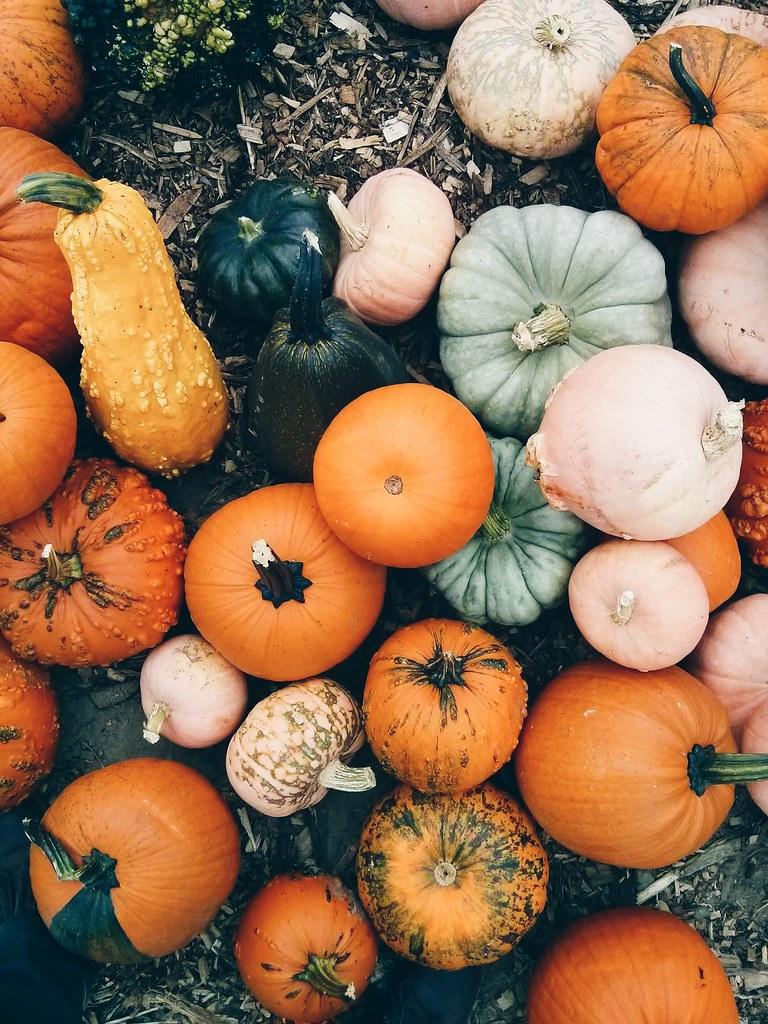 Pumpkinin 39 processed with vscocam with hb1 preset branden etheridge flickr - Fall wallpaper pumpkins ...