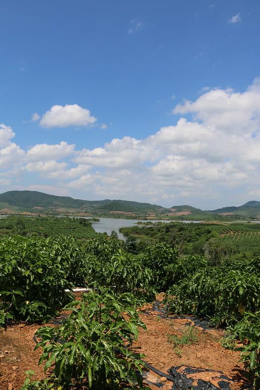 海南島也屢番出現在集水區開發或從事農業活動的情況。