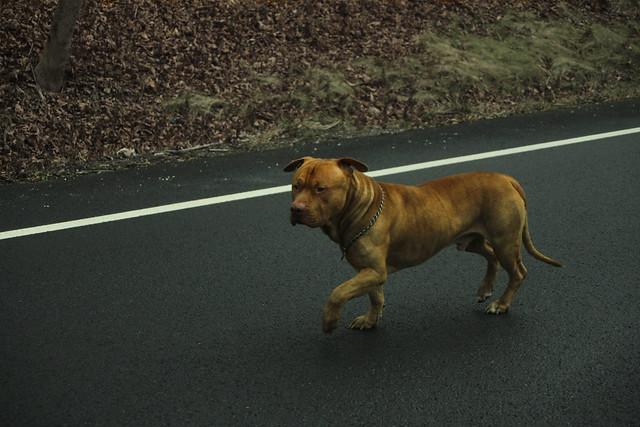 Columbia County_Pitbull Road