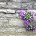 A True Wall Flower