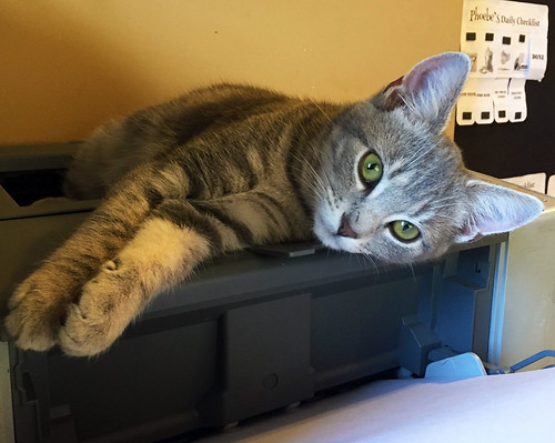 Mabel on the printer