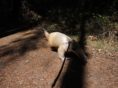 Pua sets out on a walk
