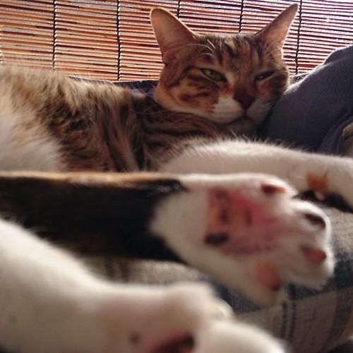足がベッドに入らない by Chinobu