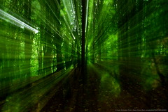 ''light speed''/''Matrix Forest'' by _NMcC_