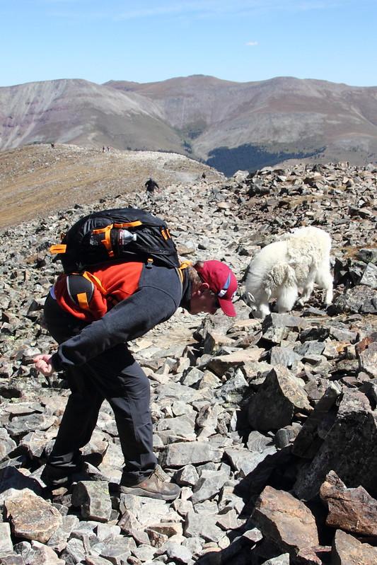 Mountain Goat & Iiro