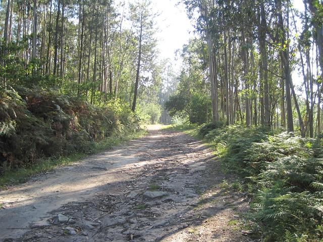 Pista en el PR-G 171 Ruta do Río San Martiño