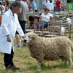 Lampeter Show 2014