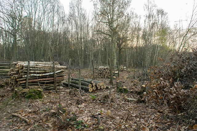 DSC_5488 Coppicing