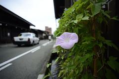20140814 Takayama 6
