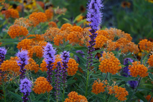 Orange and purple flickr photo sharing - Violet and orange combination ...