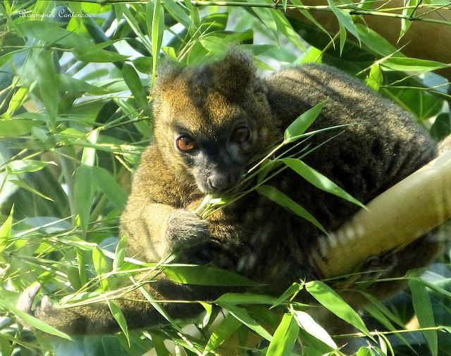 un animal - blucat- 28 août trouvé par ajonc - Page 2 14604781498_b9f429f515_z