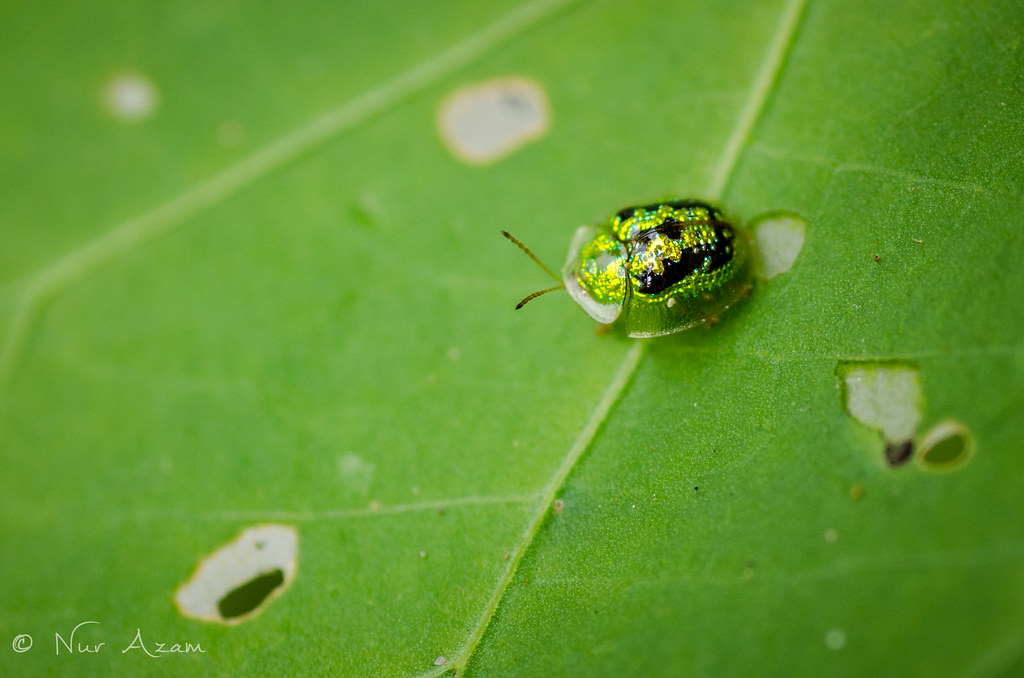 Lady Bug On Green