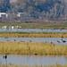 MNWR Merced National Wildlife Refuge - and San Luis National Wildlife Refuge Los Banos, CA