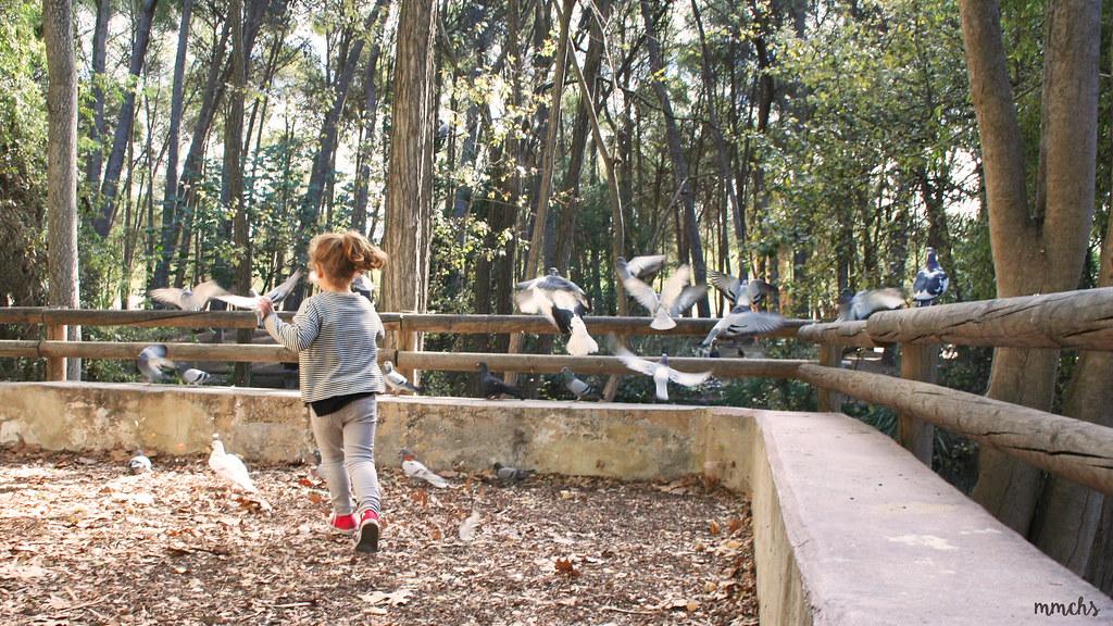 niña jugando con las palomas