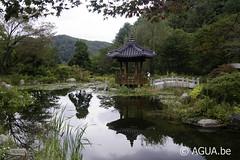 The Pond Garden @ The Garden of Morning Calm