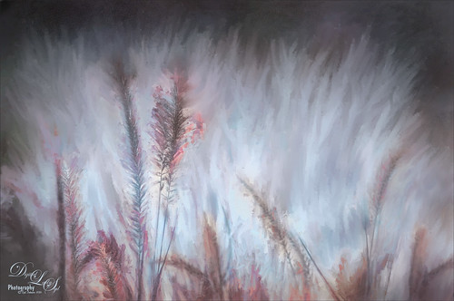 Image of painted fountain grass