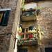 Back alley Siena