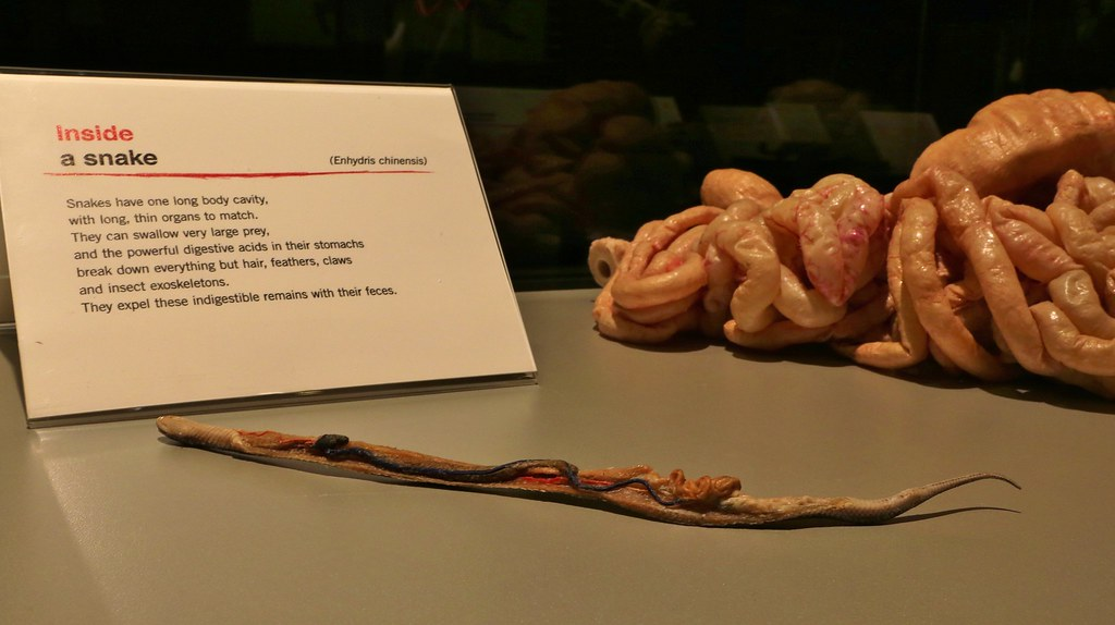 Anime Body Body Worlds Animal Inside