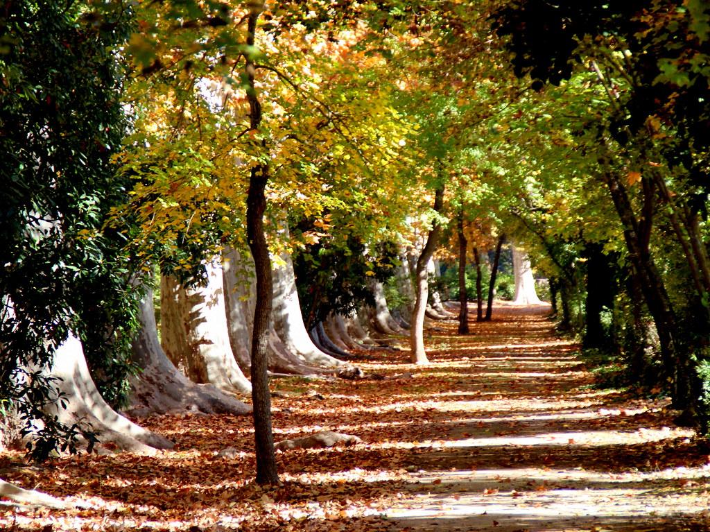 Oto o en los jardines de aranjuez mediocentros manuel for Los jardines de aranjuez