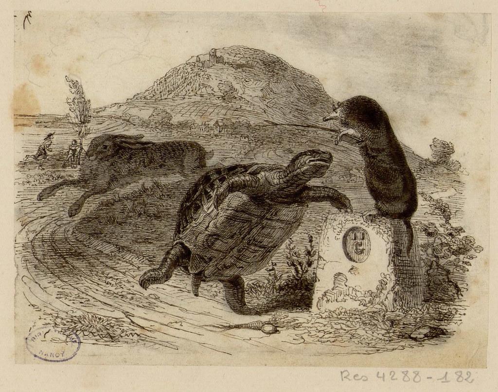 Le li vre et la tortue les fables de la fontaine - Dessin du lievre et de la tortue ...