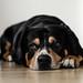 bruno_dog_sad