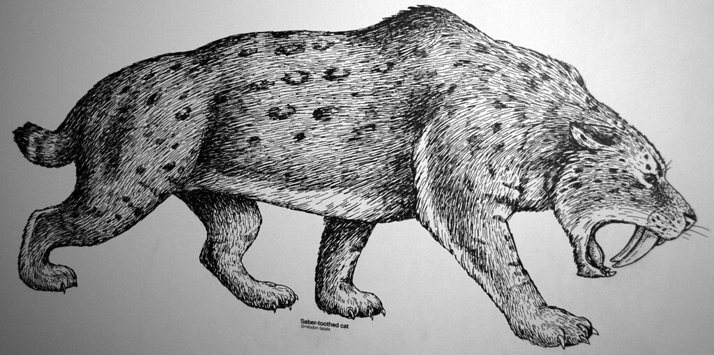 Smilodon Fatalis Reconstruction Of The Saber Toothed Tige