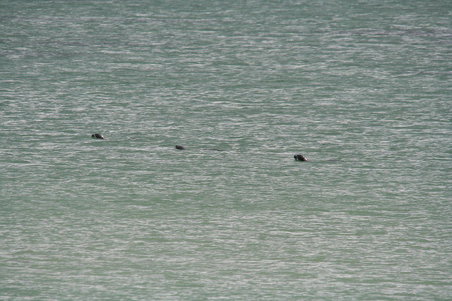 Seals in the North Sea
