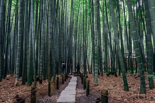 Kamakura8_Hokokuji_06