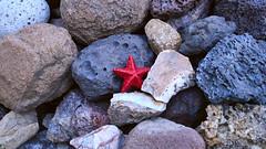 Una estrella ha caído