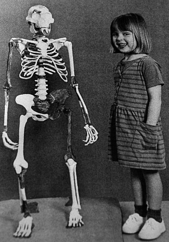 Australopithecus Afarensis Fossil Hominid Lucy Skeleton
