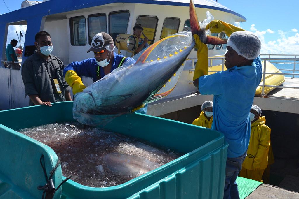 Tuna fishing south tarawa elaine byrne flickr for Elaine b fishing reports